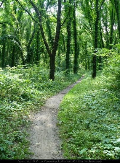 Lawrence River Trail - The trail runs through open grassy areas and among vine-covered trees.
