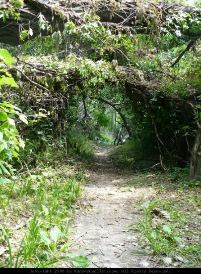 Lawrence River Trail - The trail passes beneath some downed trees, making short leafy tunnels.