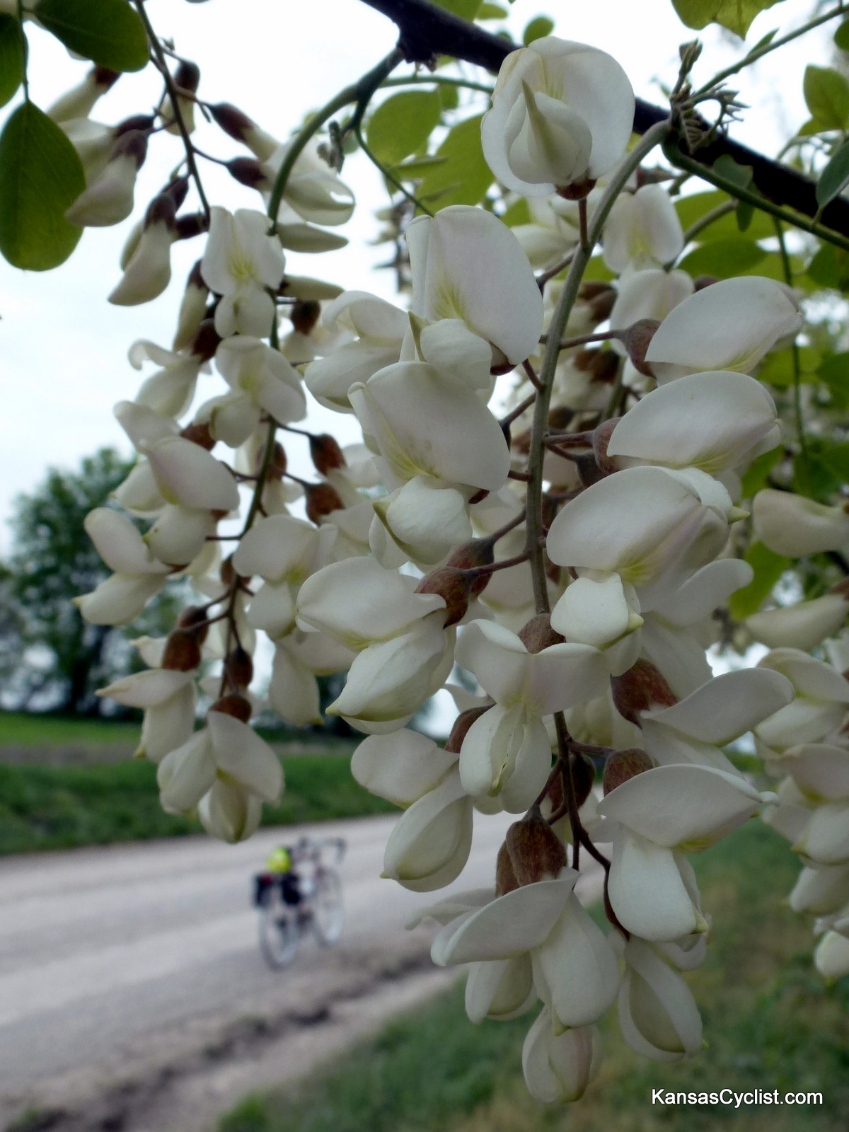 30Days Biking 2012 Black Locust