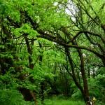2012-04-29 - Green