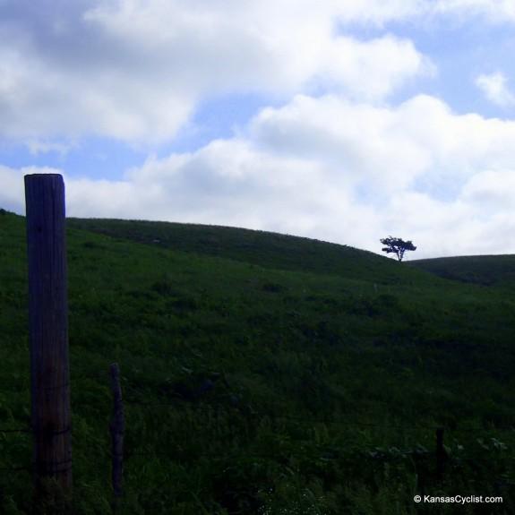 Kandango-2014-3-CleftTree