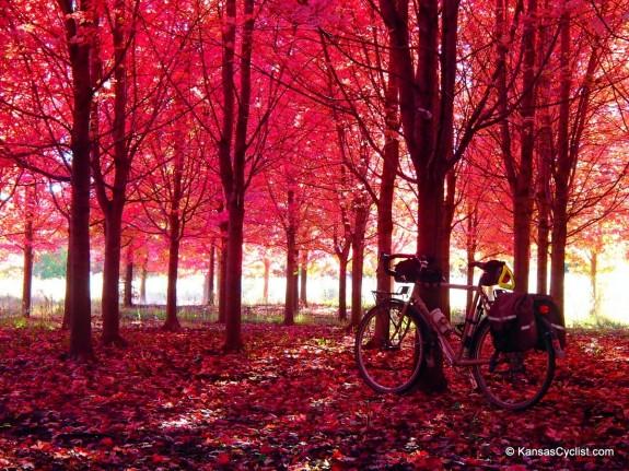 Pink Autumn Scene